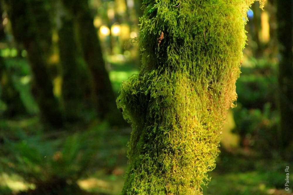 Мох на ветках деревьев