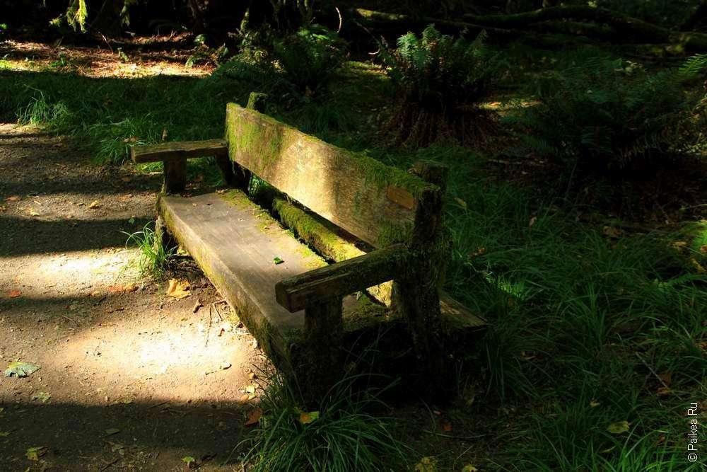 Старая скамейка в лесу