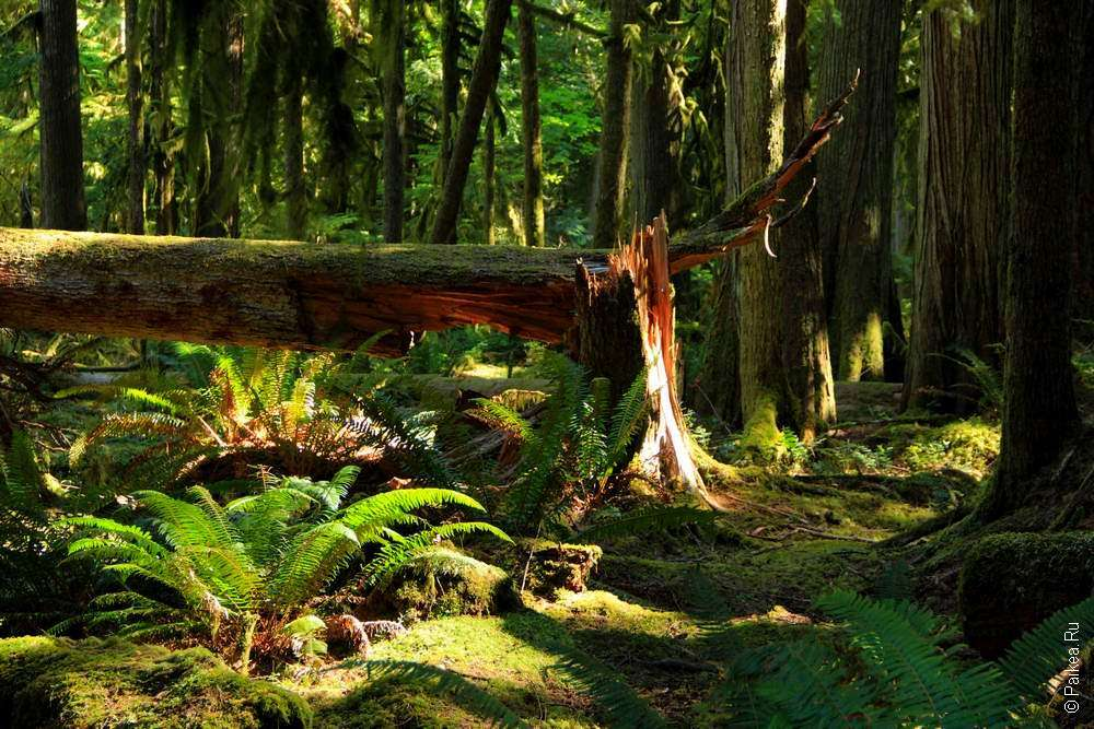 Сломанное дерево в лесу