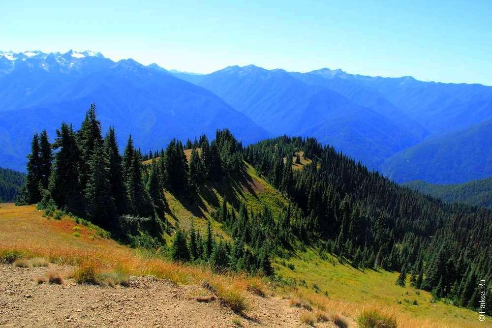 Лес на горных вершинах штата Вашингтон