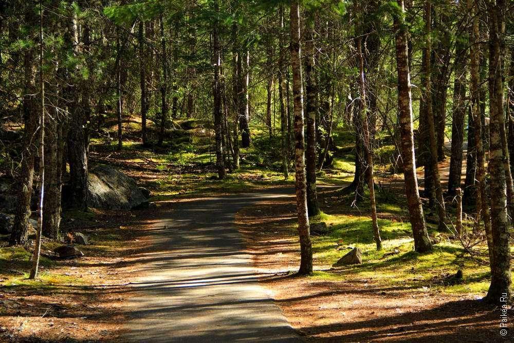 Тропинка по лесу в Северных Каскадах