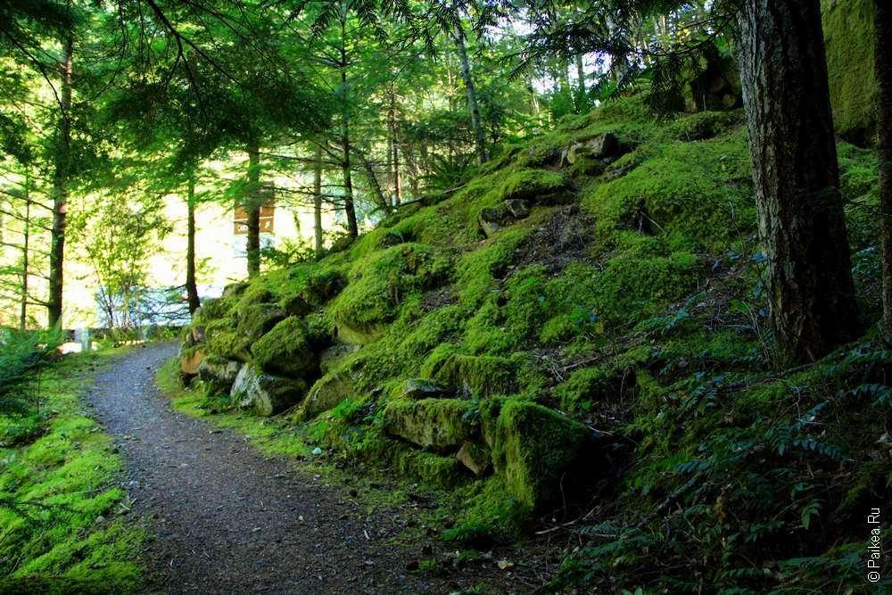 Тропинка у зеленого холма