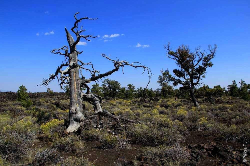 Засохшие деревья в дьявольском саду