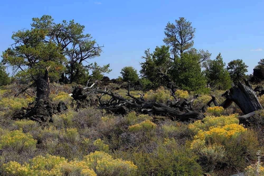 Деревья и кусты на лавовом поле