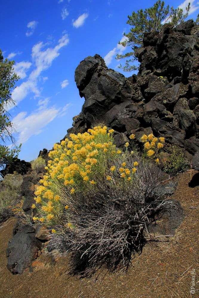 Желтый куст и лавовые горы