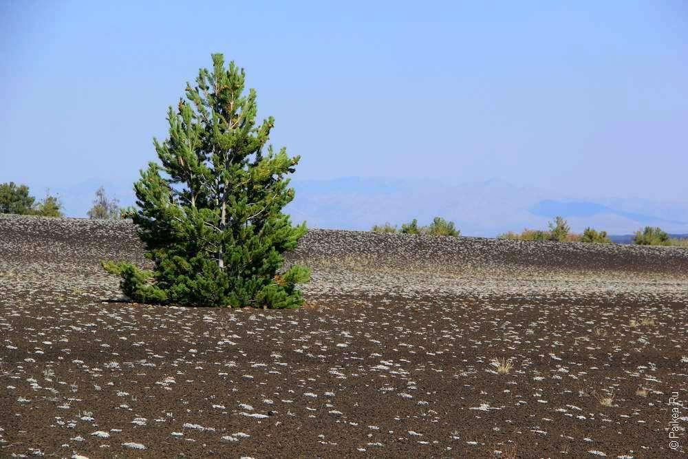 дерево на лунной поверхности