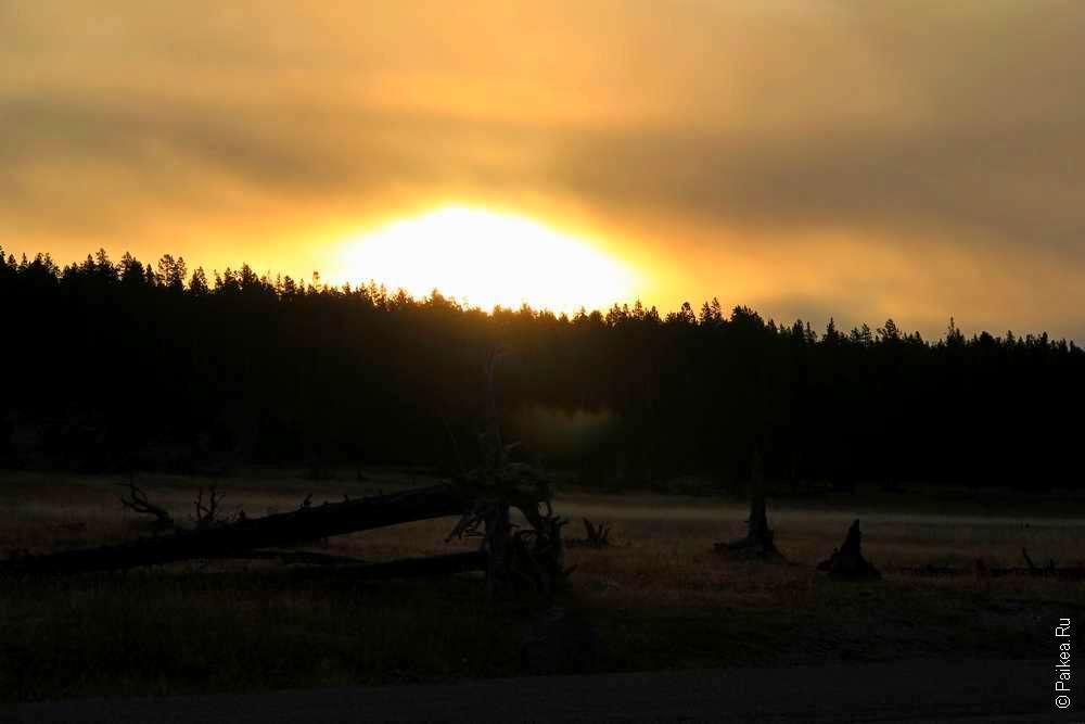 Солнце встает над лесом