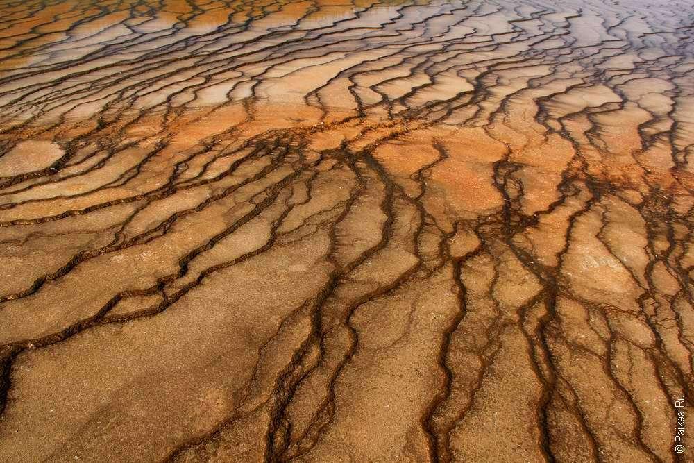 Микроорганизмы-экстремофилы в Йеллоустоун