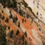 Деревья на склоне каньона