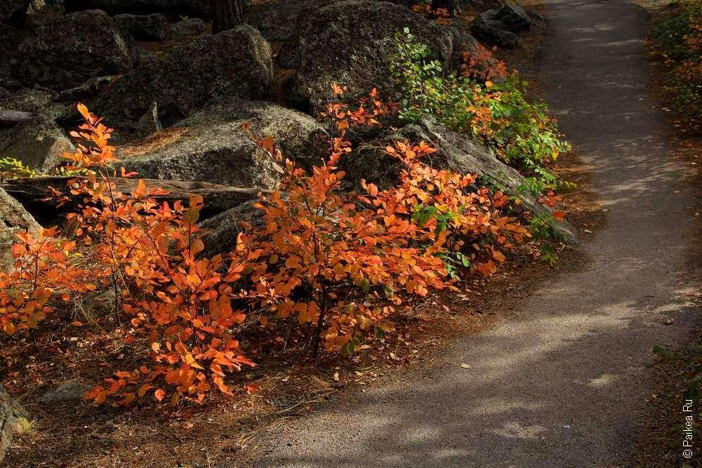 Оранжевые кусты вдоль тропинки в штате Вайоминг США