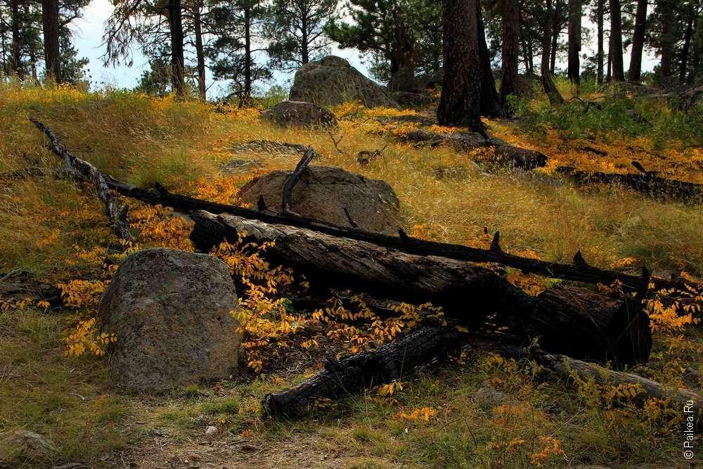 Природа в осеннем лесу штата Вайоминг, США