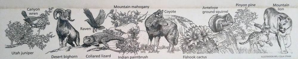 Флора и фауна в Колорадо