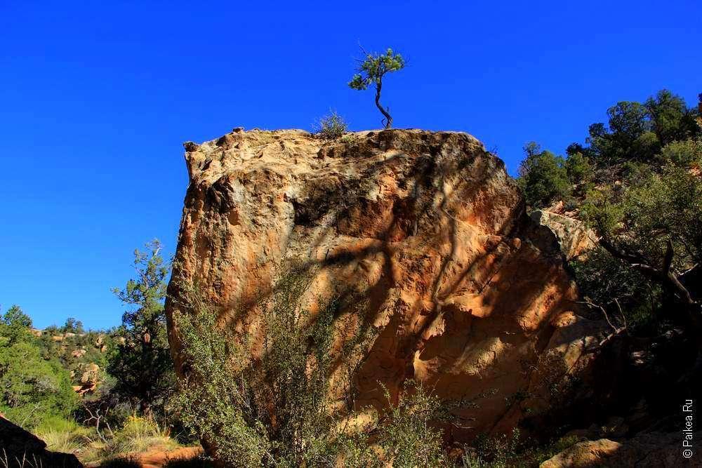 Дерево на высокой скале