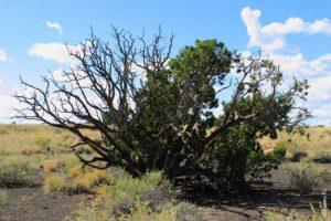 Растения Аризоны