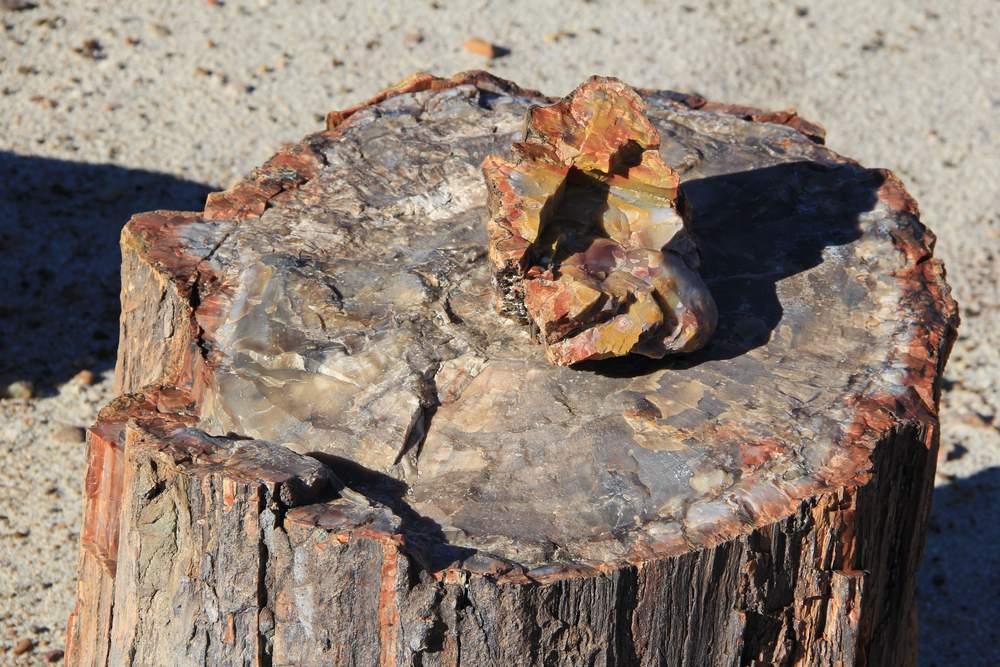 Петрифайд форест, Окаменевший лес, США (Petrified forest, USA)