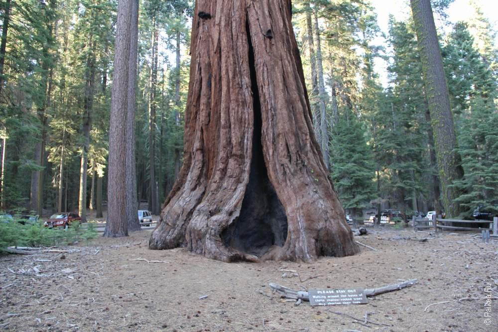 Йосемите, США (Yosemite, USA)