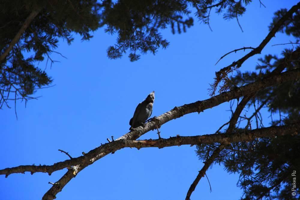 птица на ветке в США