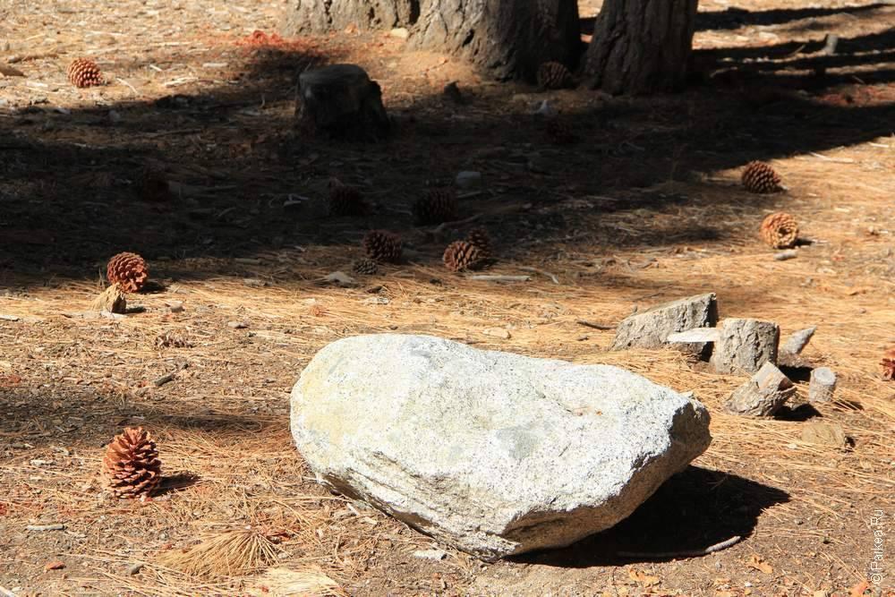 большой камень в лесу