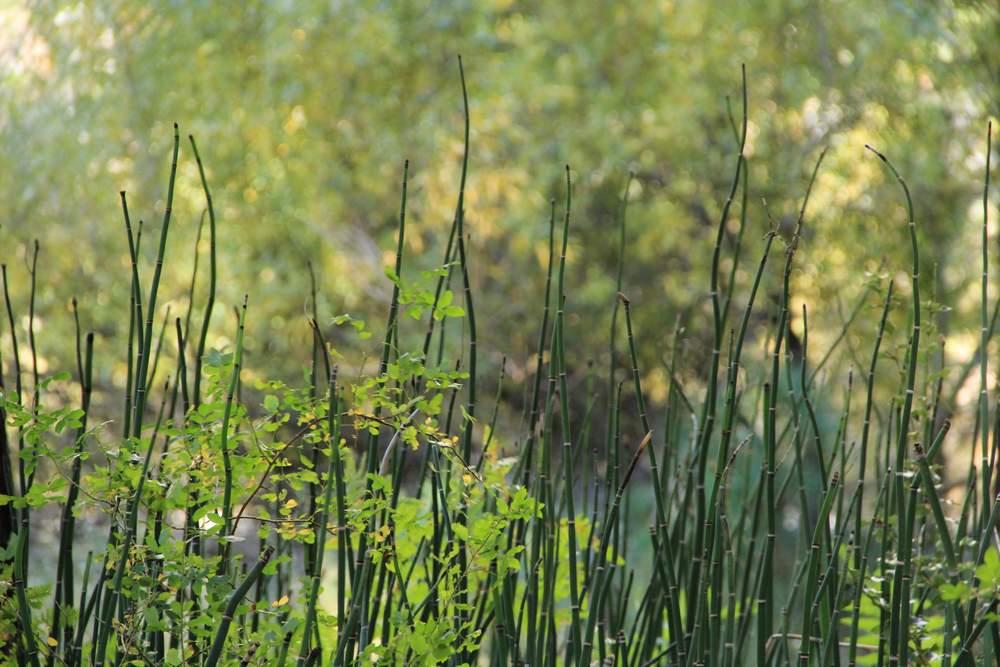 зеленые ветки растений