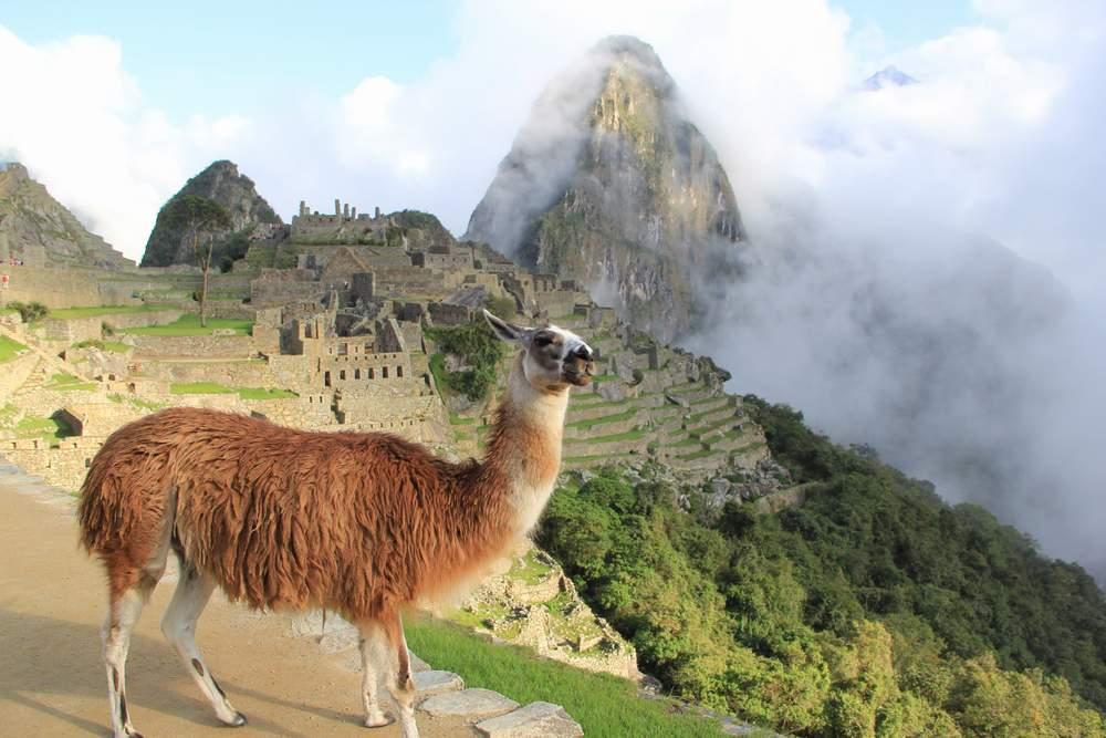 Обязательная фотография с ламой