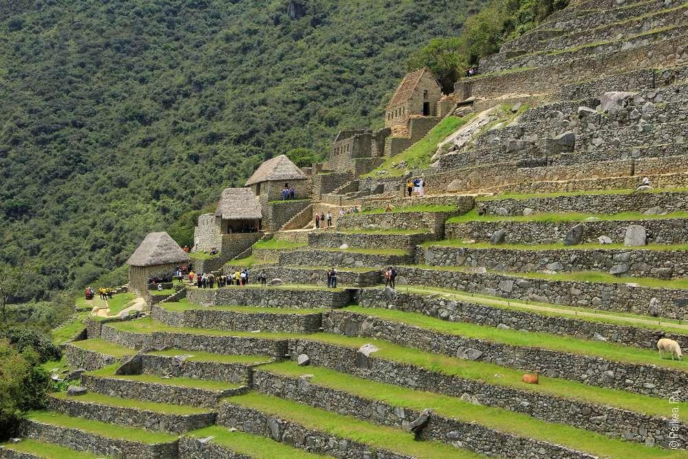 Терассы в Мачу-Пикчу