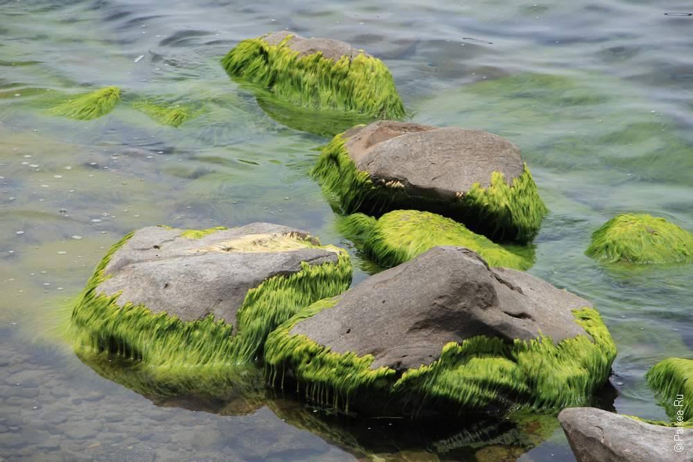камни поросли водорослями