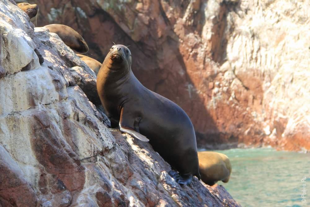 Острова Баллестас, Перу (Ballestas islas, Peru)