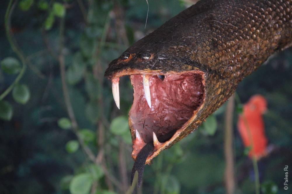 Тут принято пугать всем, что есть страшного в Эквадоре