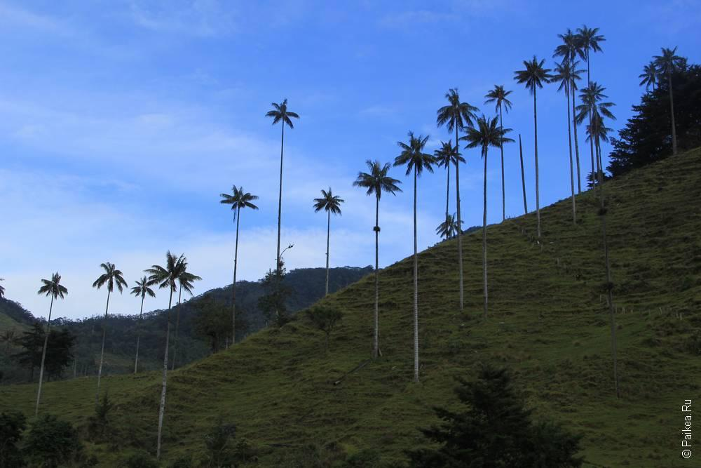 Долина Кокора, Колумбия (Valle de Cocora, Colombia)