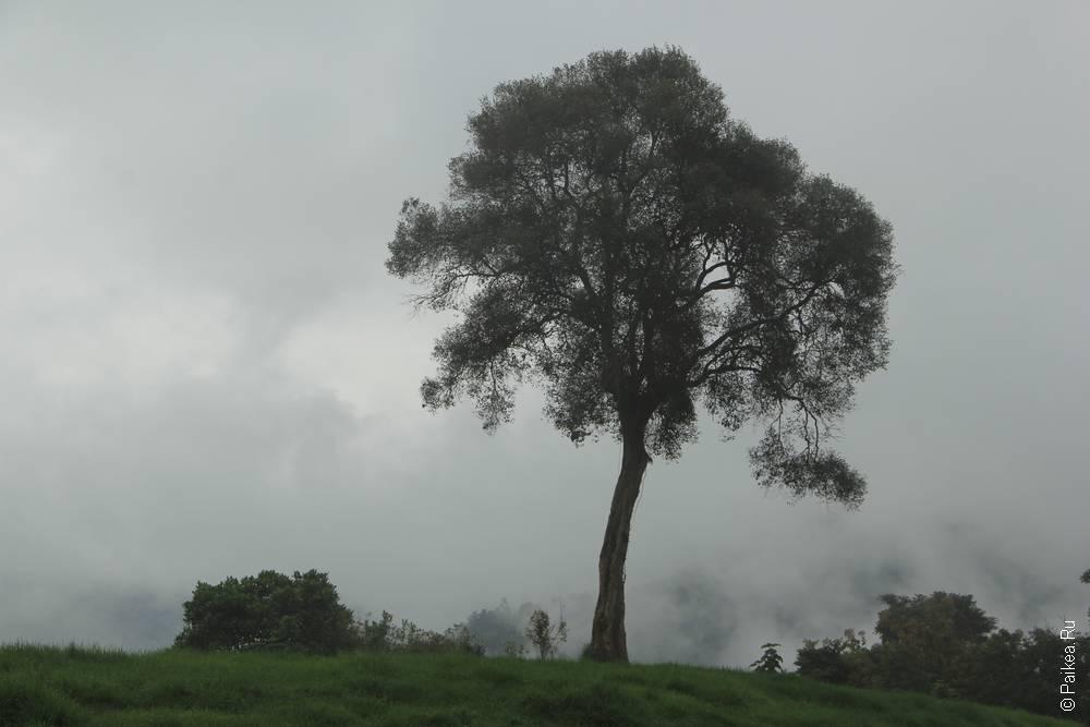 Утро как всегда туманное