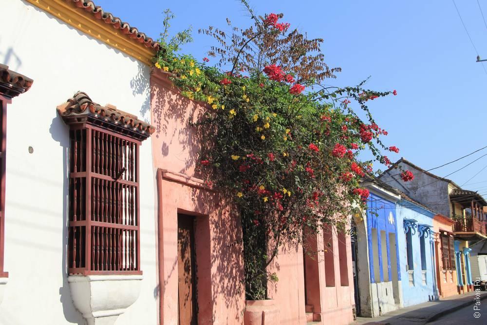 Цветы на стене дома на Карибах