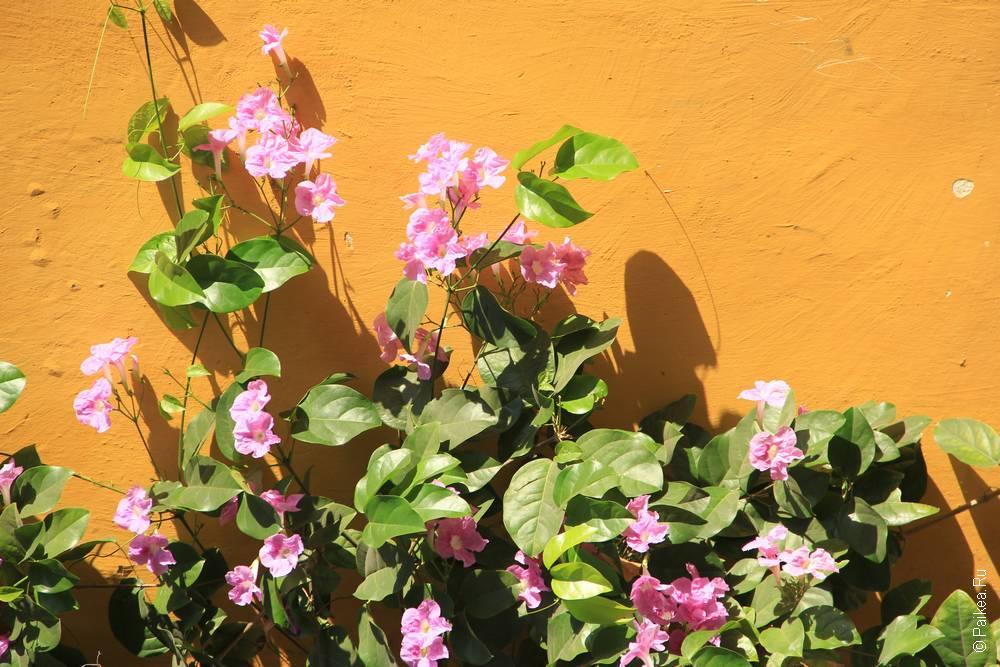 Цветы у стены дома в Картахене