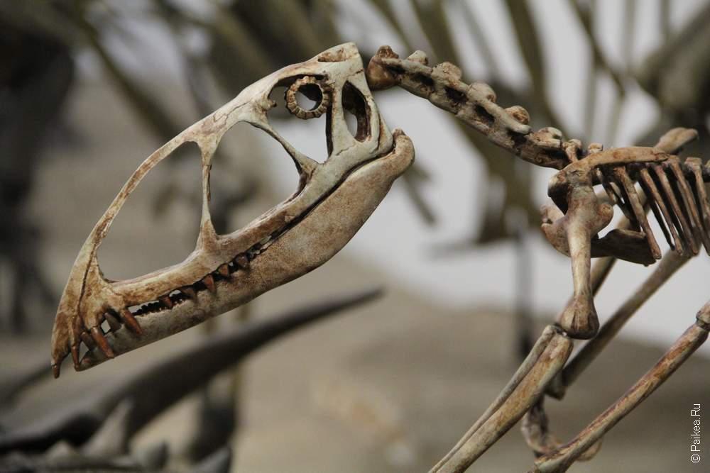 Динозавры были и маленькие!