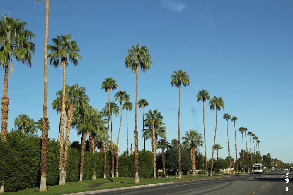 В Палм-Спрингс пальмы - есть!