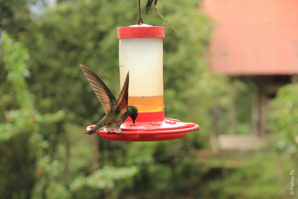 Юркие колибри