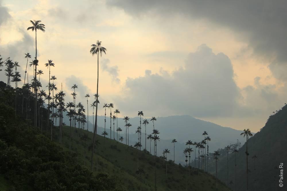 Наступает вечер, а пальмы по-прежнему прекрасны