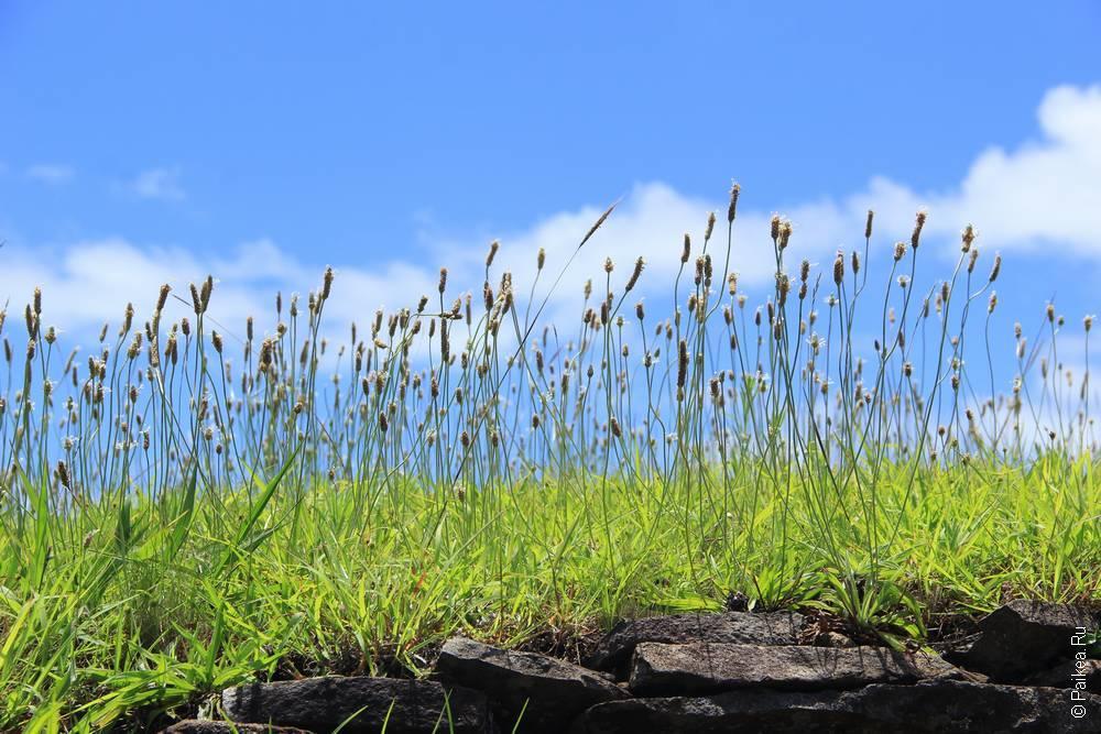 Оронго так высоко, что облака цепляются за траву