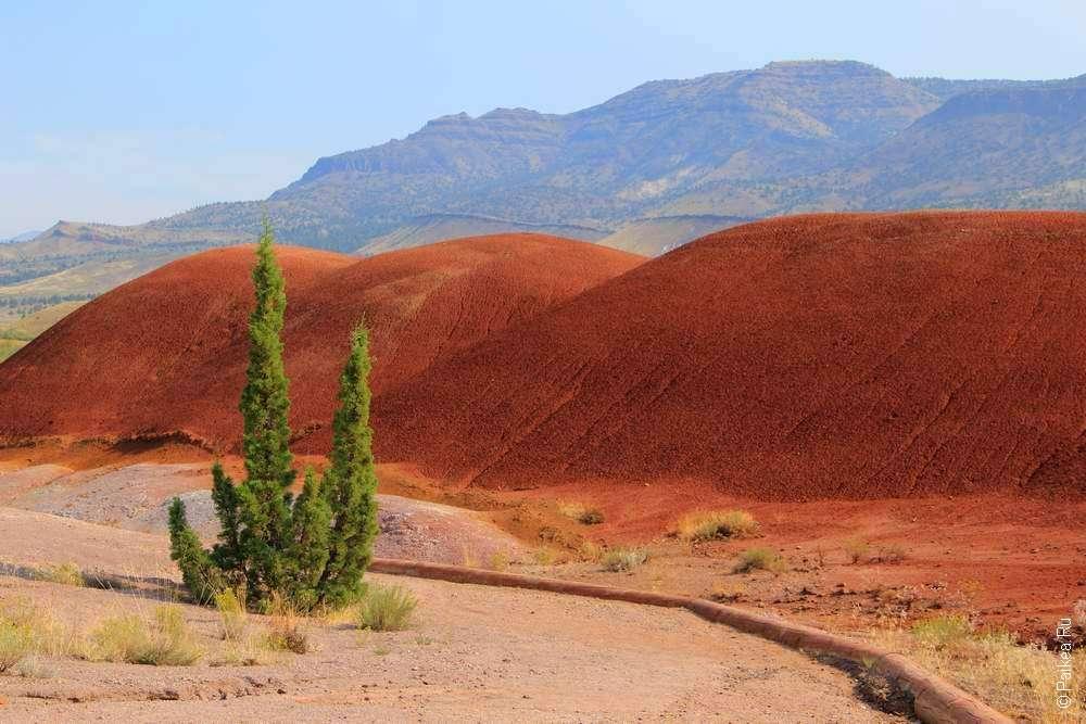 Зеленый куст и красные холмы
