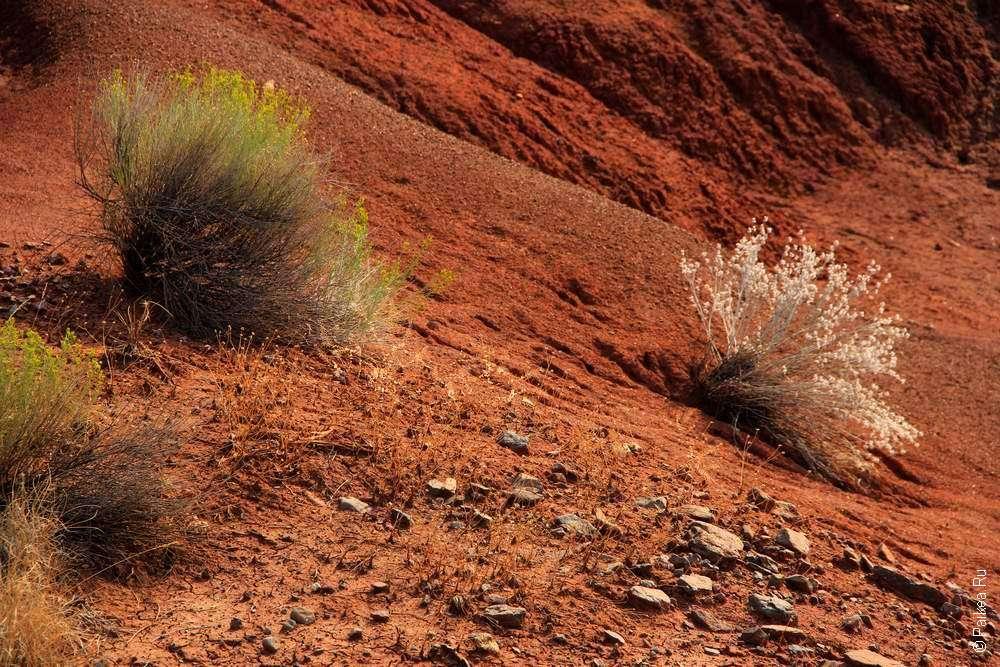 Кусты растут на раскрашенных холмах в Орегоне