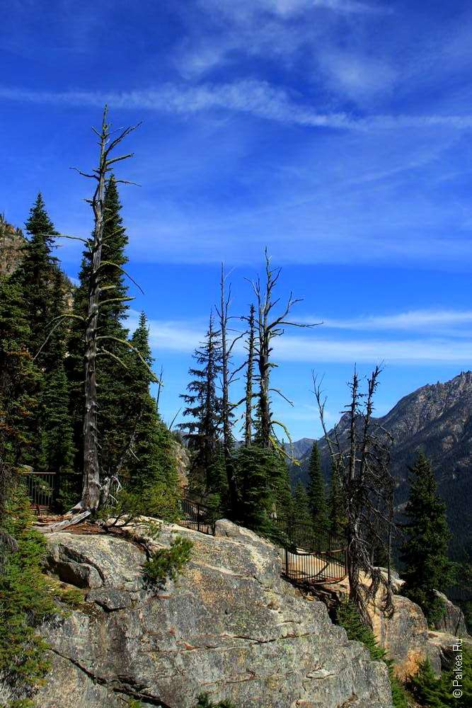 Деревья на склоне гор