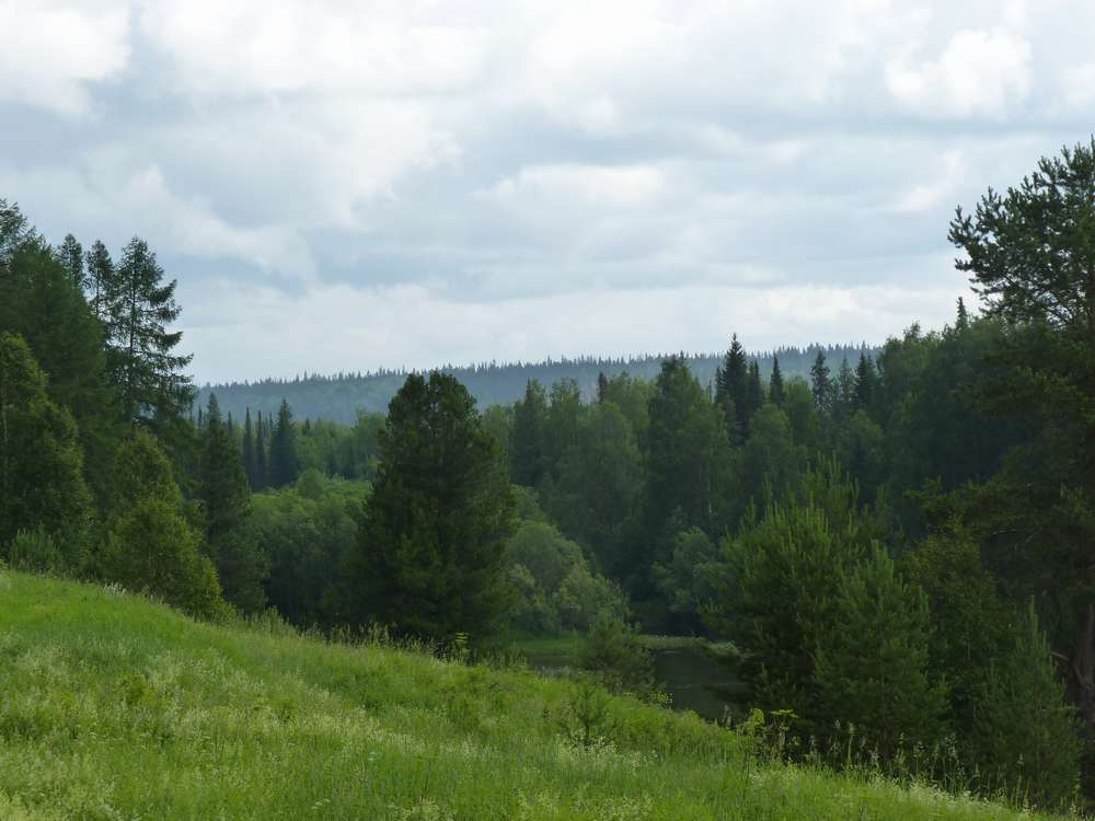 Елки на склоне холма