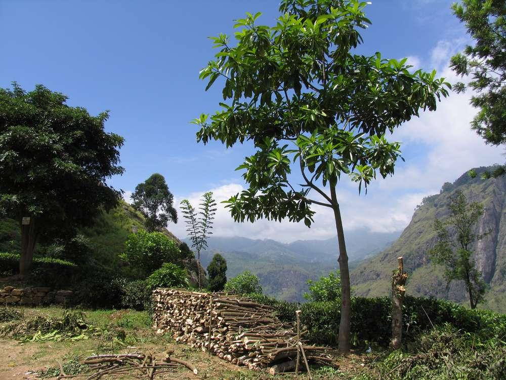 Шри Ланка достопримечательности Пик Адама