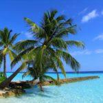 Отдых на Мальдивах под пальмой