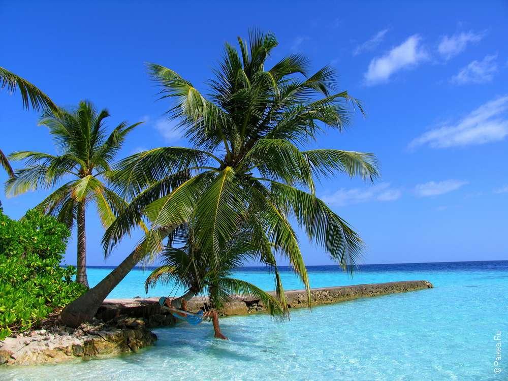 В гамаке под пальмой на Мальдивах