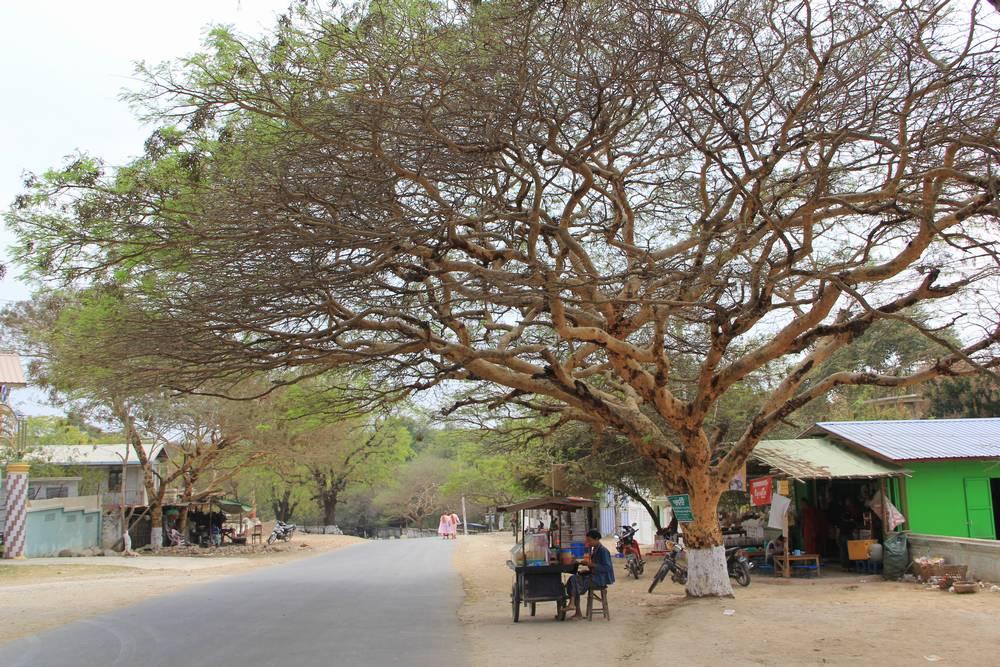 крона дерева над дорогой