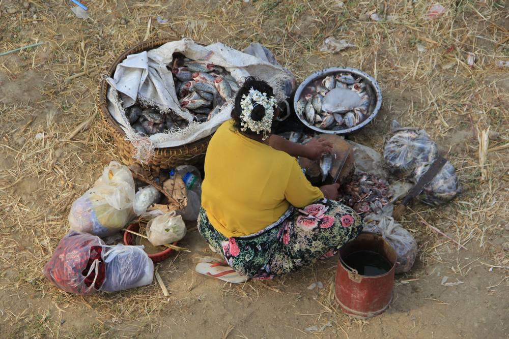 Торговка рыбой