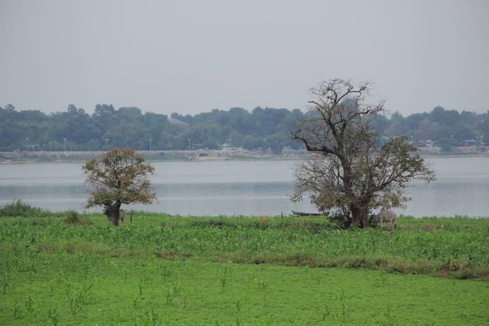 деревья на берегу озера