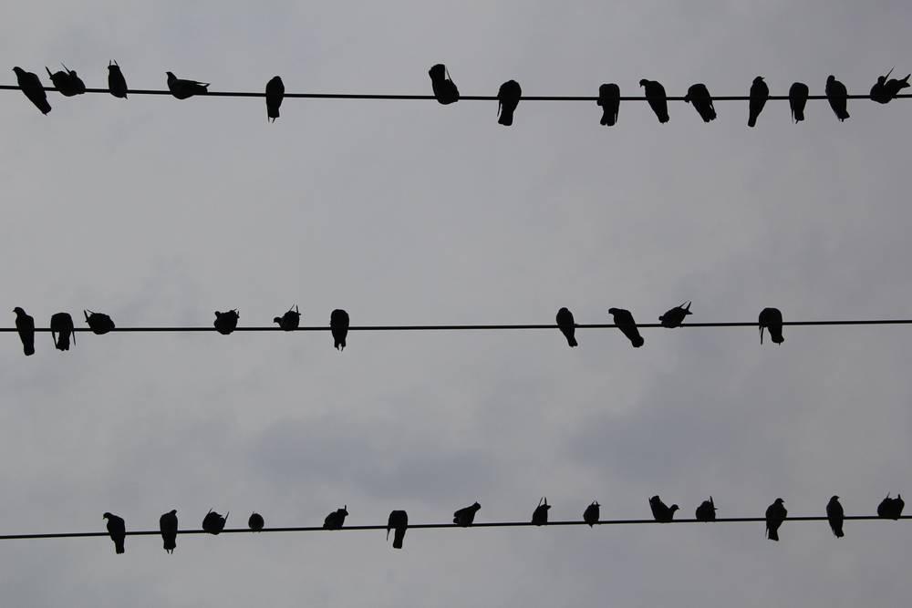 Гуляя по Мандалаю, внимательно смотрите вверх. На проводах любят сидеть птички, обсуждать туристов и делать им пакости
