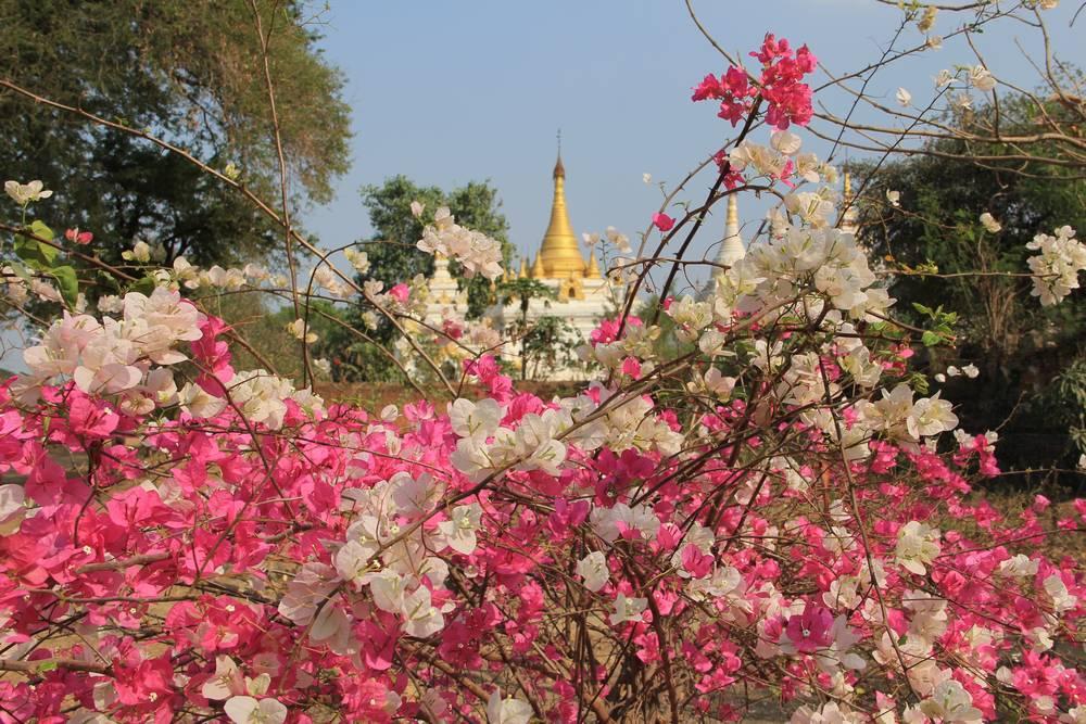 Пагода и цветы в Иньве Мьянма
