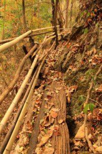 Национальный парк Мэ Сурин